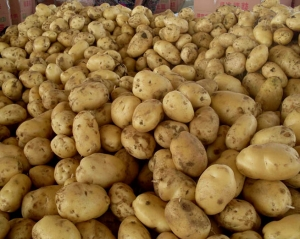 昆明富硒土豆