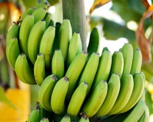 昆明富硒香蕉